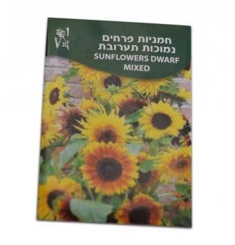 זרעי חמניות פרחים נמוכות תערובת
