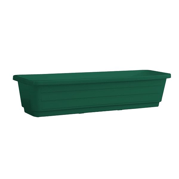 אדנית עצמון ירוק כהה