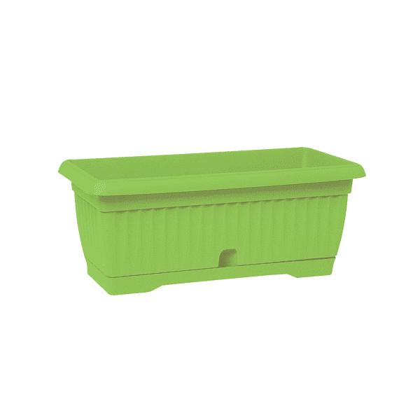 אדנית גולן ירוק בהיר