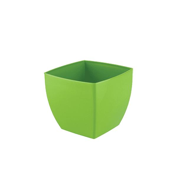 עציץ אגת ירוק בהיר
