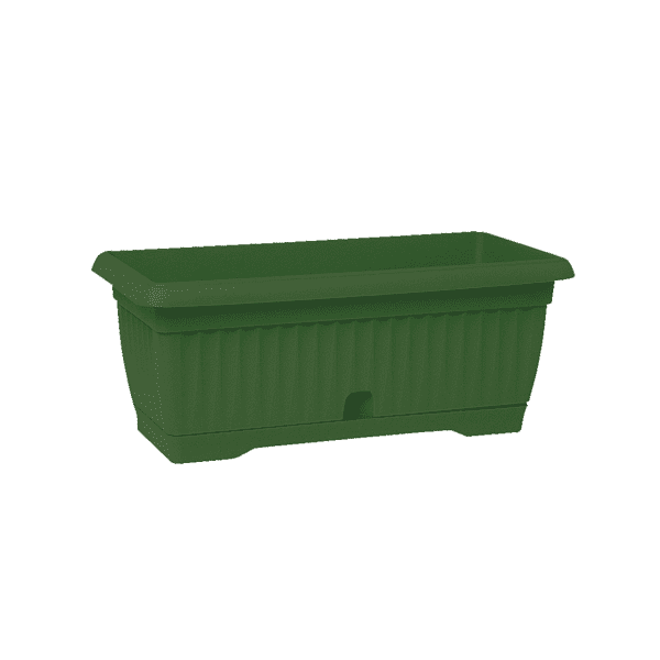 אדנית גולן ירוקה