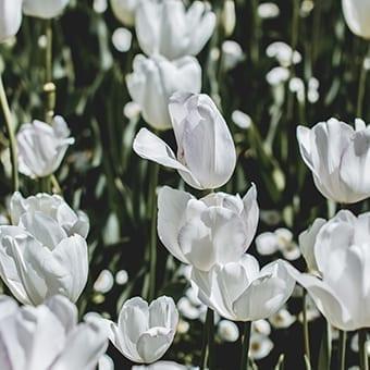 זרעים ופקעות