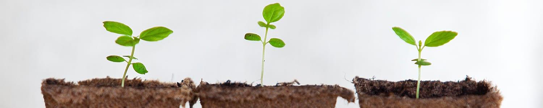 זרעים לשתילה