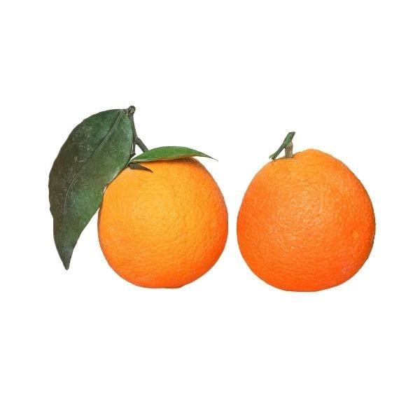 תפוז שמוטי