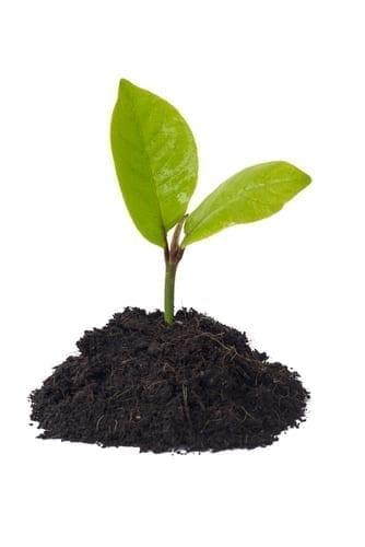 זרעיםלשתילה