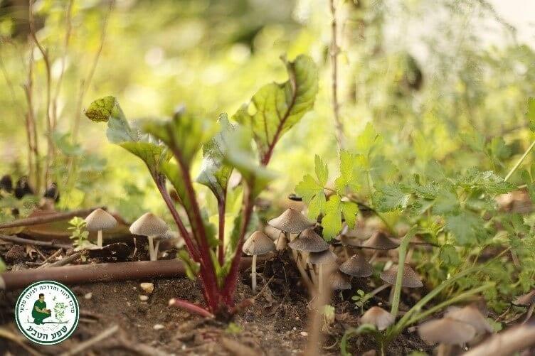 צמחים ליד פטריות