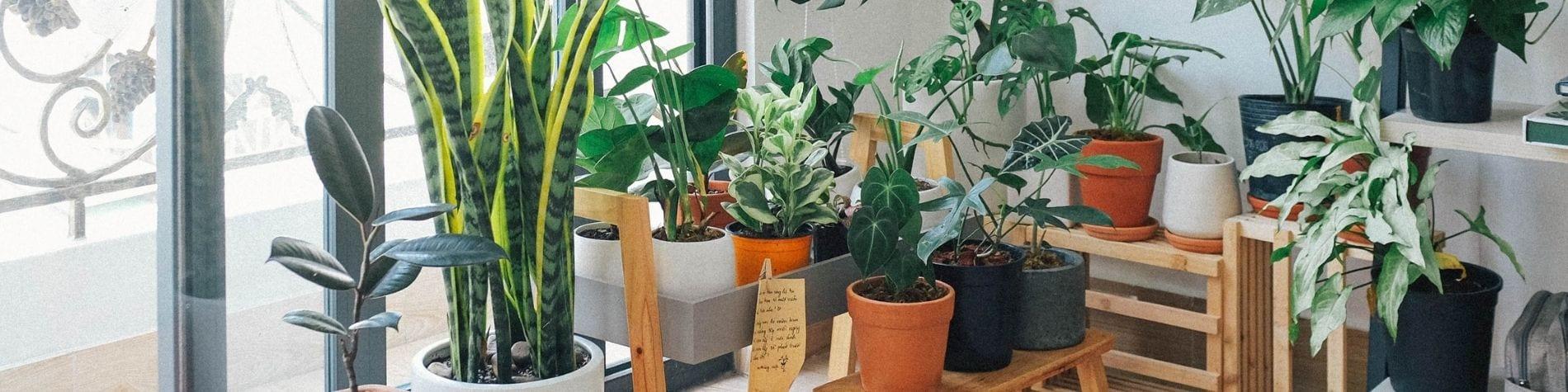 צמחים לבית